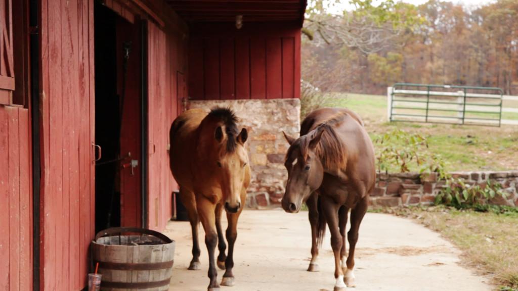 Fall Horses 3